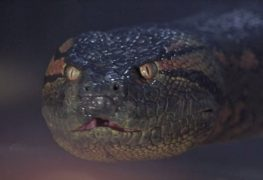 anaconda-1997